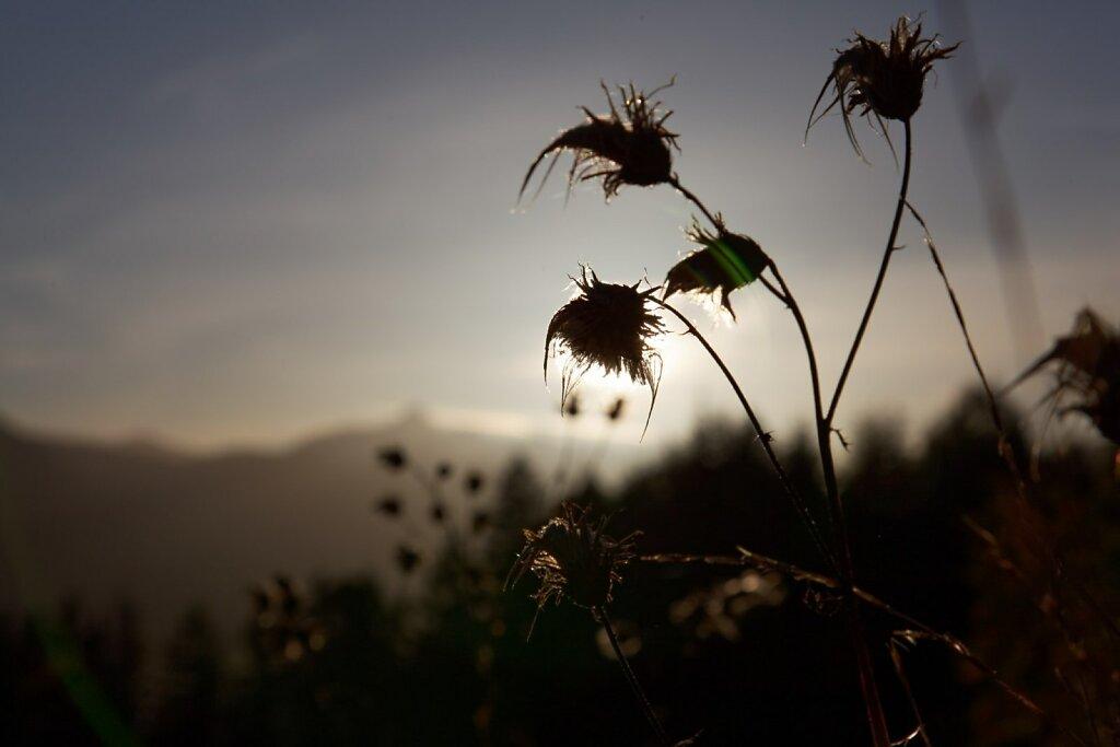Wank20111011-022-DxO.jpg